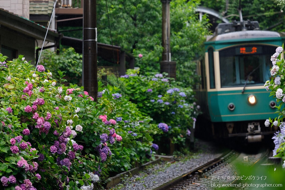江ノ電×紫陽花の1度は撮っておきたいド定番スポット3選