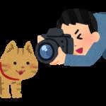 【撮影法】一眼レフで猫を上手く撮る方法を自己流に解説します