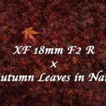 【作例】X-E3×XF18mmF2 Rで奈良の紅葉をスナップ撮影してきた