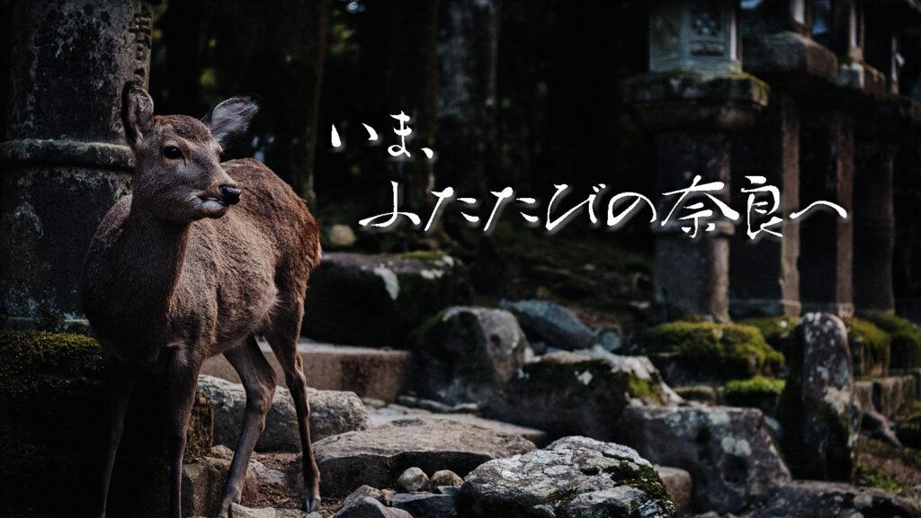 いま、ふたたびの奈良へ。平成最後の一人旅~2018年秋編~